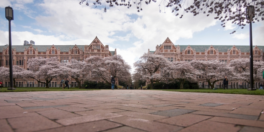UW Quad with cherry blossoms