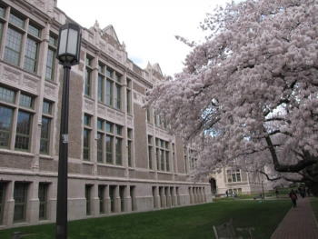 Savery Hall and cherry blossoms